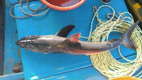 Vacationers warned after sharks caught in Korea's East Sea