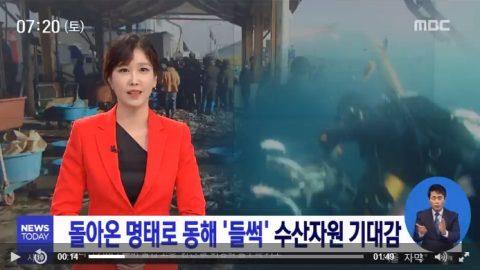 돌아온 명태로 동해 '들썩' 수산자원 기대감